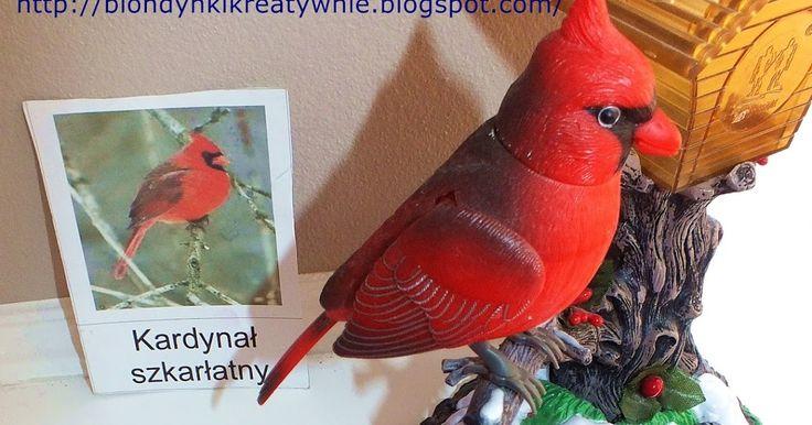 NASZE PTAKI   Lena jest miłośniczką ptaków zresztą wszystkiego co lata sama bardzo by chciała latać jak to pięciolatka .   Często jedźmy p...
