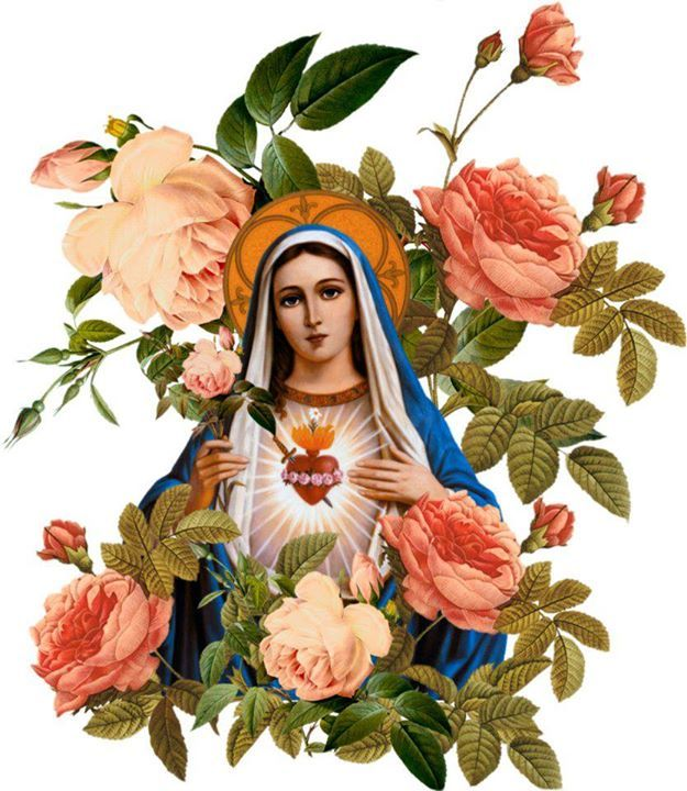 Immaculate Mary - pray for us