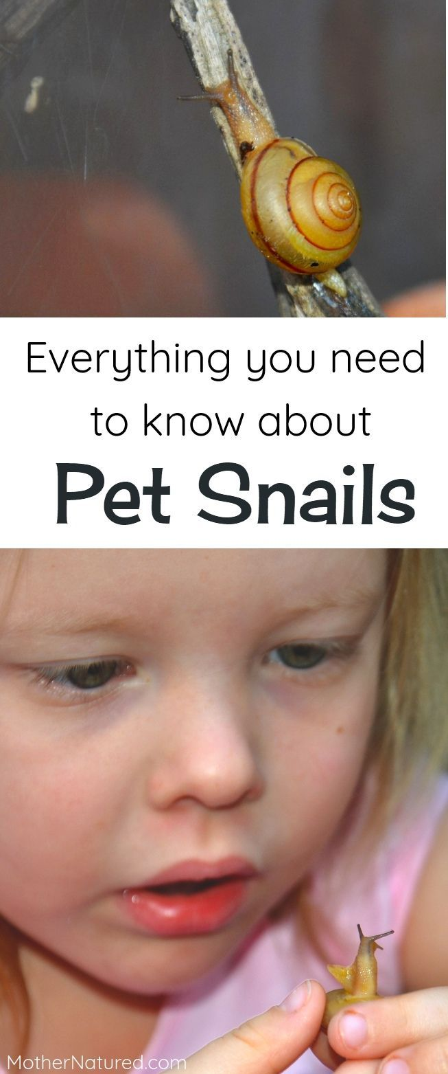 Pet Snail Care: EVERYTHING you need to know  #petsnails #snails #petsforkids