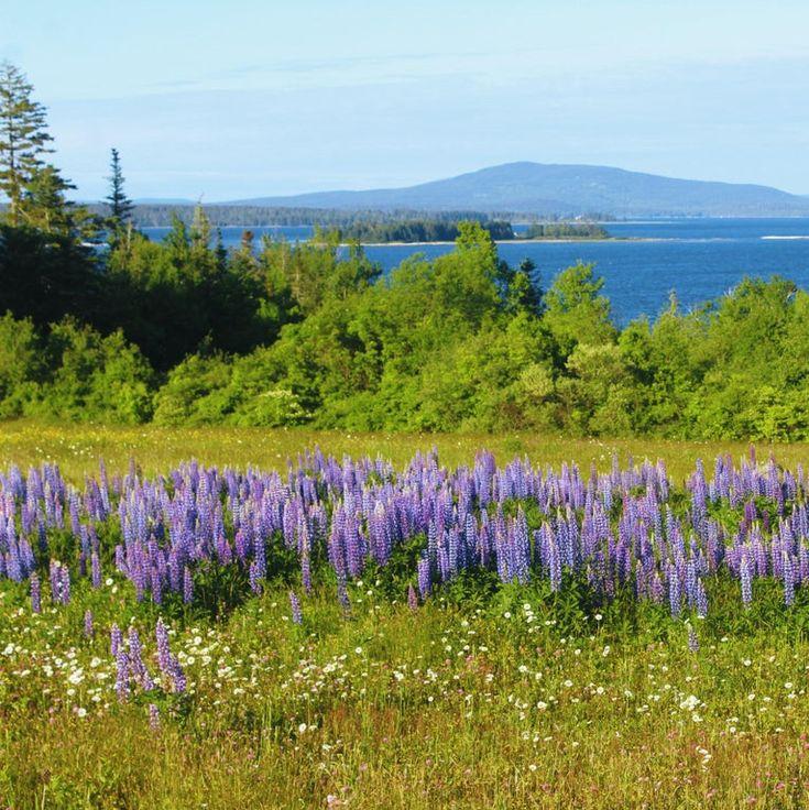 Brooklin Maine in 2020 Baxter state park, Tourist info