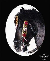 Pere Caules | Cap de cavall