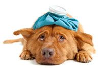 Signs that your dog may be sick.... Makes me paranoid just looking at it.