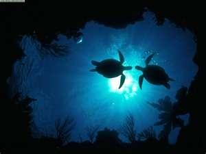 Loggerhead Sea Turtle <3