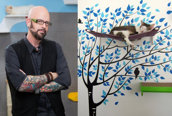25 best ideas about jackson galaxy on pinterest cat for Jackson galaxy images
