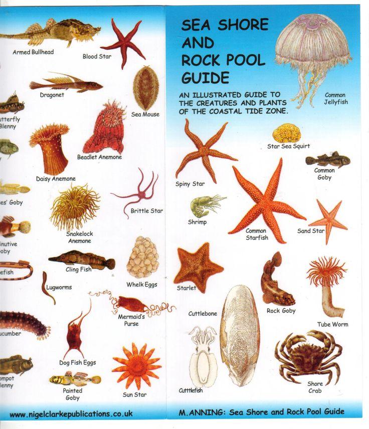 Oregon tide pool identification google search tide for Deep sea fishing oregon coast