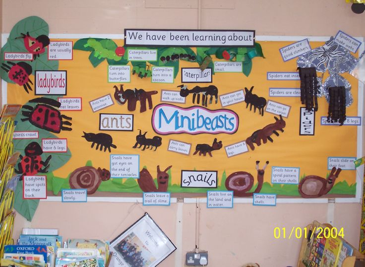 Minibeasts Classroom Display Photo - SparkleBox