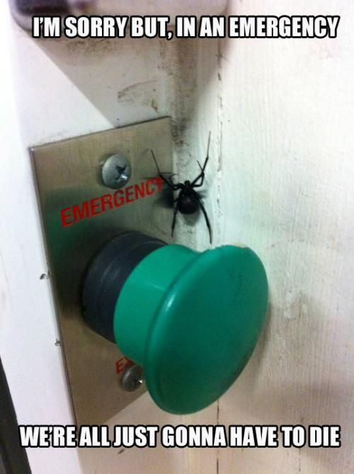 Emergency | Funny: Black Widow, Laughing, Funny Pictures, Funny Commercial, So True, Funny Stuff, Buttons, I Hate Spiders, True Stories