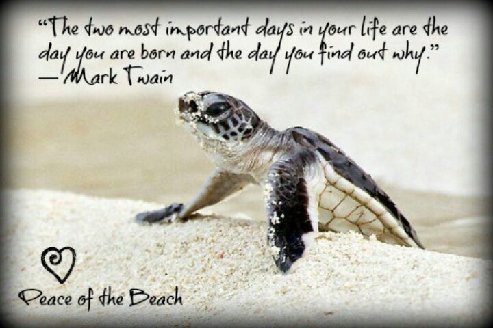 Turtle Quotes 127 Best Turtletortoise Quotes Images On Pinterest  Turtles Funny .