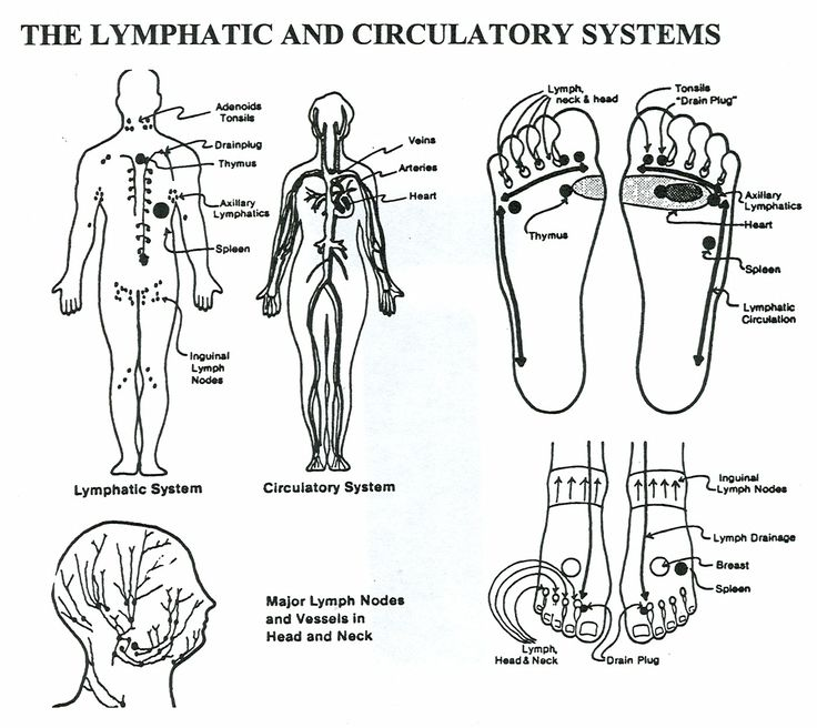 Lymphatic System-All great spots to massage to get the Lymph flowing towards the heart and back down.