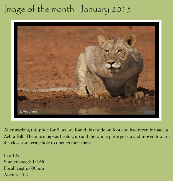 Untamed Odyssey: Image of the month by Gary Parker