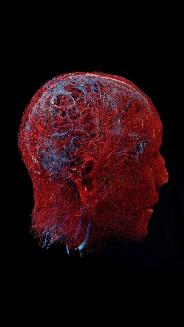 Blood vessel essay