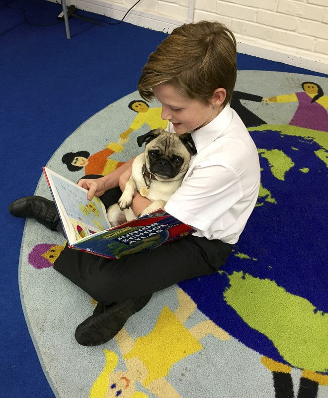 Doug the Pug Therapy Dog Makes A Difference to Many Lives http://www.thepugdiary.com/doug-the-pug-therapy-dog-makes-a-difference-to-many-lives/
