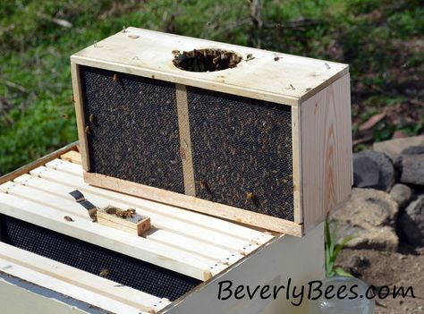 Install Package Bees - Install Package bees as soon as possible after arrival. If it is going to be a day or two before the install, put the bees in a cool...