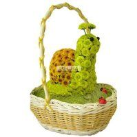 - Composition: Chrysanthemum daisy varicolored,Decorative elements,Oasis,Basket.