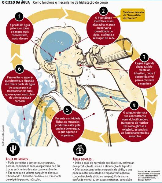 Como Funciona o Mecanismo de Hidratação do Corpo - Baixa Umidade do ar e os Riscos para a Saúde   Farmaceutico Digital