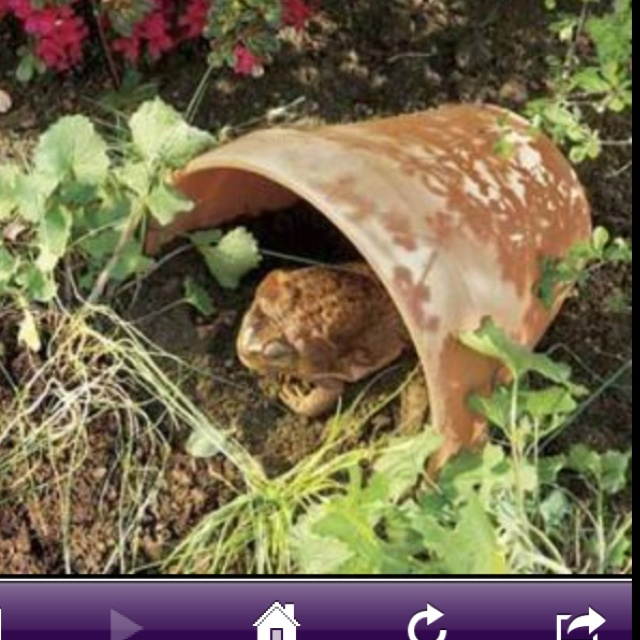 24 best Frogs in the garden images on Pinterest Toad house Frog