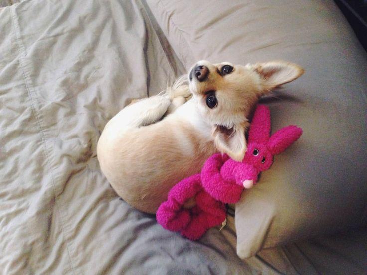 Alexa loves her toys