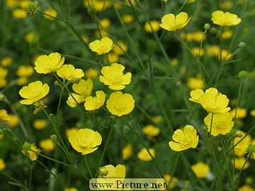 Buttercups #childhood #nostalgia