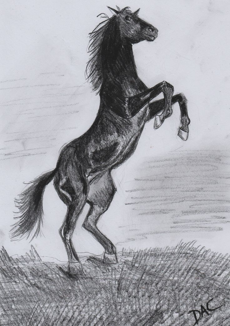 Black horse rearing #rearing #black #horse #drawing #charcoal #pencil