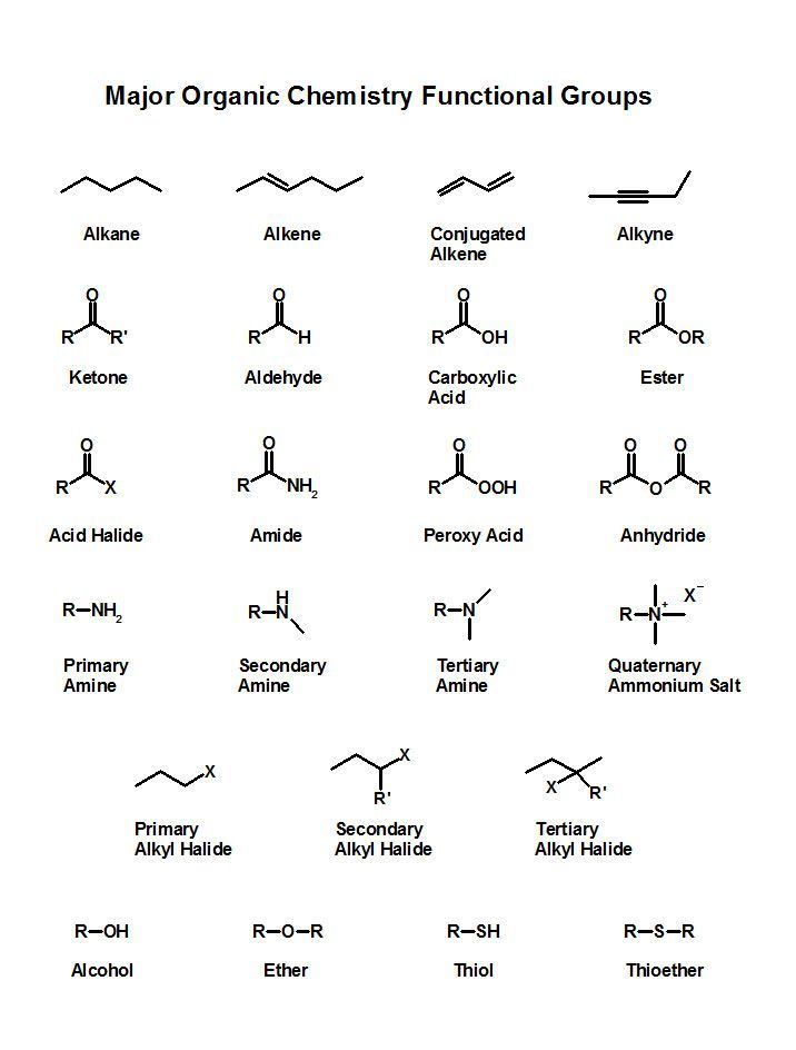 major functional groups