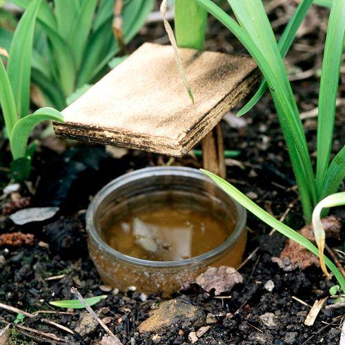 Cas 1 : Éliminez les limaces sans produits