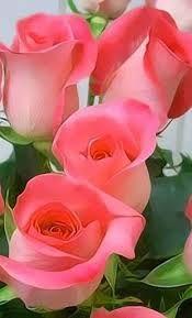 gyönyörű rózsák - Pesquisa Google