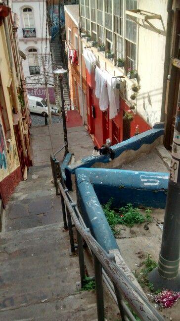 Gato en Valparaíso