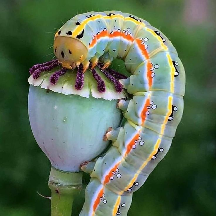 Everything Has A Symbiotic Relationship With Something Else Animals Nature Caterpillar