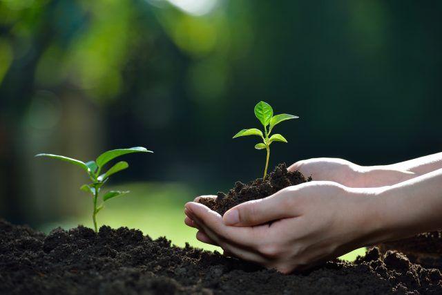 カイロ 再 利用 使い捨て 使い捨てカイロの再利用!肥料にできるって知ってた?