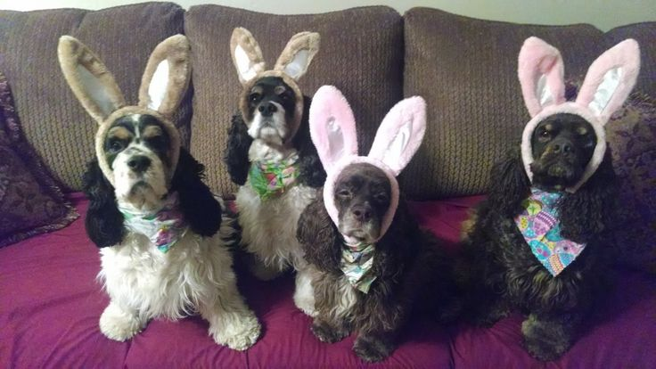 Springtime Dog Photo Contest Winners Announced - Fidose of Reality
