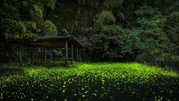 Photograph The firefly forest by Mars Lin on 500px