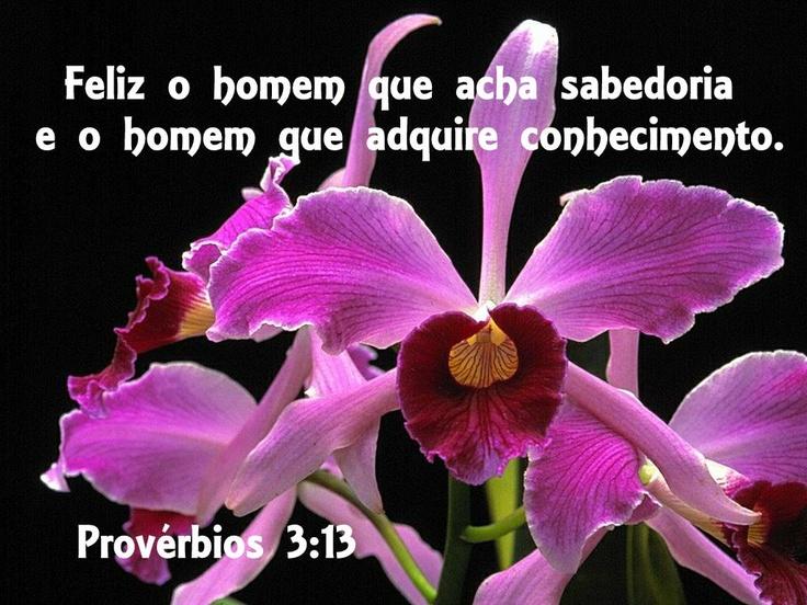 Prov. 3:13