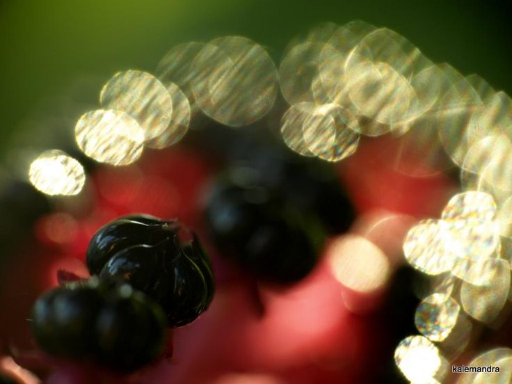 Berries with bokeh / Clickasnap