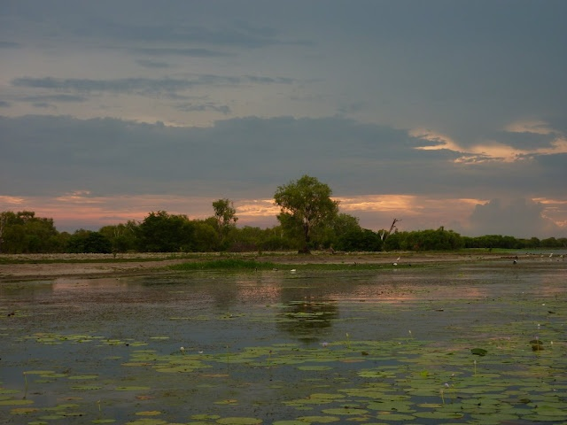 Australia - Kakadu National park - the Mary River wetlands by sunset