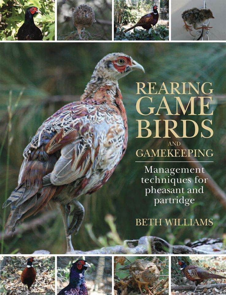 Rearing Game Birds and Gamekeeping by Beth Williams | Quiller Publishing. A comprehensive guide on how to raise pheasants and red-leg partridges, with particular emphasis on the health and welfare of the birds.Advice is given on rearing game in a low-cost and efficient manner, without compromising quality and ensuring the welfare of the birds is of paramount importance. Invaluable for amateurs and professionals alike. #game #birds #gamekeeping #pheasant #partridge