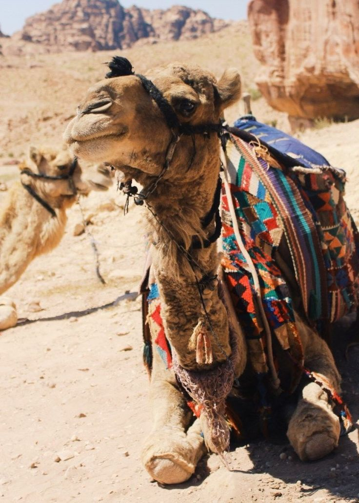 Why should you travel to Jordan? The reasons are too many to list! In fact…
