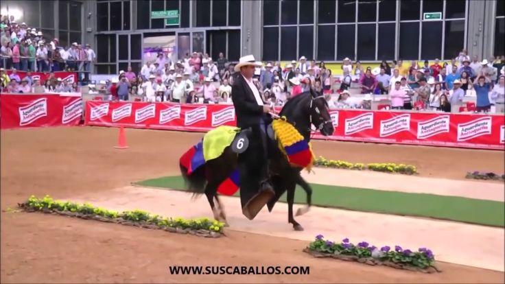Candidatos A Ser los Grandes Campeones Nacionales De la Trocha Colombian...