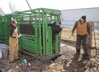 Stacy Elliott and her husband, Kevin, work to prepare for an upcoming sale at Tri E Simmentals near Clifford - See more at: http://www.agweek.com/event/article/id/23044/group/Livestock/#sthash.a4yuEOq0.dpuf