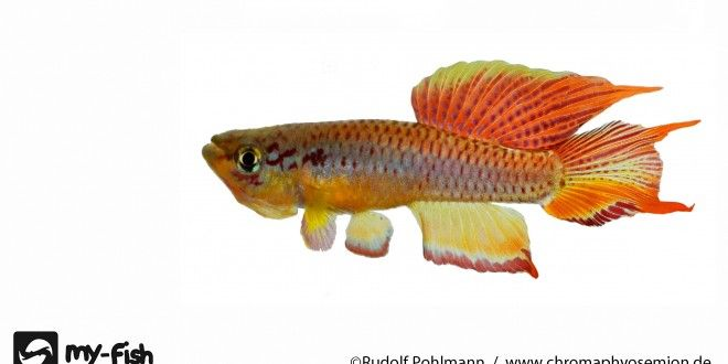 my-fish ist ein interaktives Internetportal, das dir ein vielfältiges Angebot rund um das Thema Aquaristik bietet.