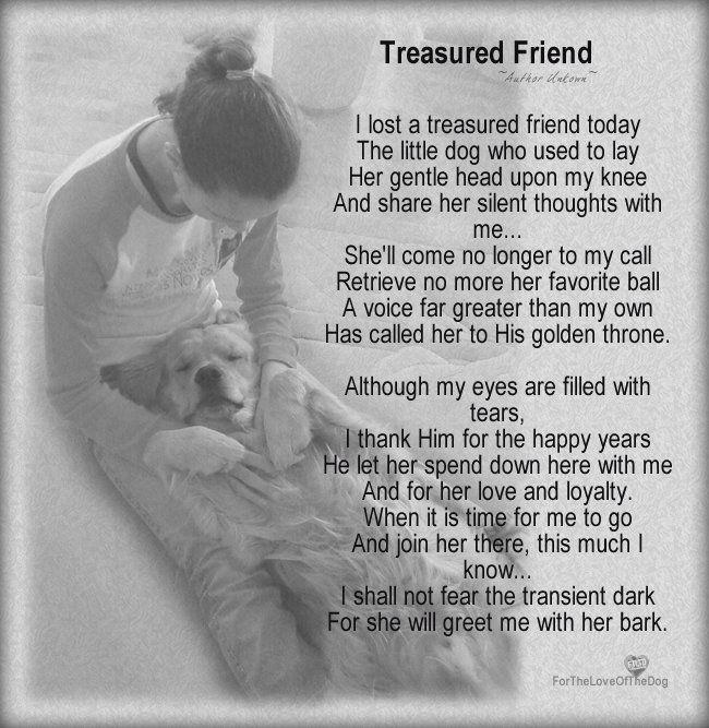 I lost my treasured friend. :(
