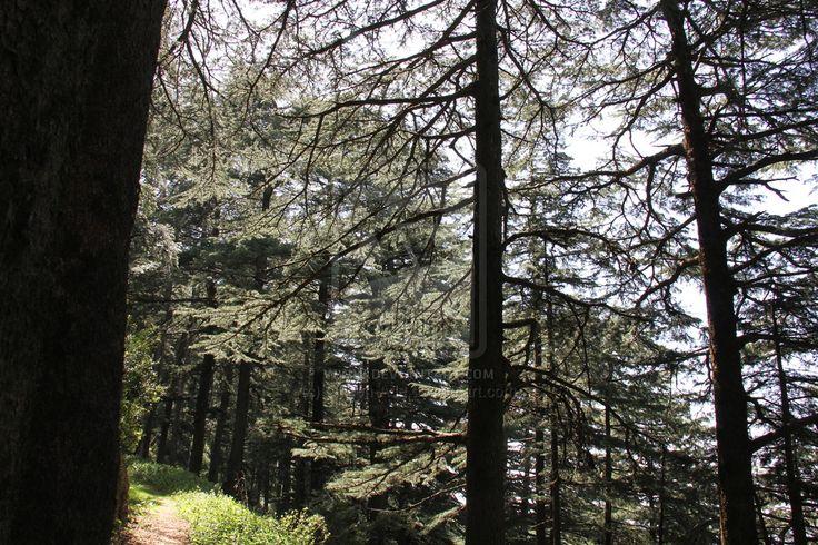 Nature by Queen-Ade.deviantart.com on @deviantART