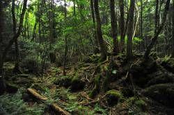 深夜の神社、深夜の墓地、深夜の森、深夜の海 一人で行くならどれが一番怖い?