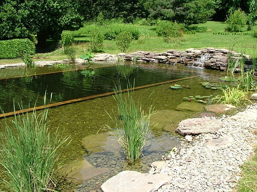 ecological pool