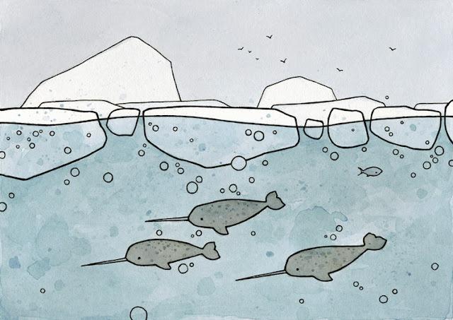 Narwal illustration