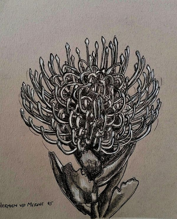Hermien van der Merwe; Title: Fynbos:  Pincushion for Rienie Medium: Pen-and-Ink drawing on paper with oil paint background Size: 200 x 200mm