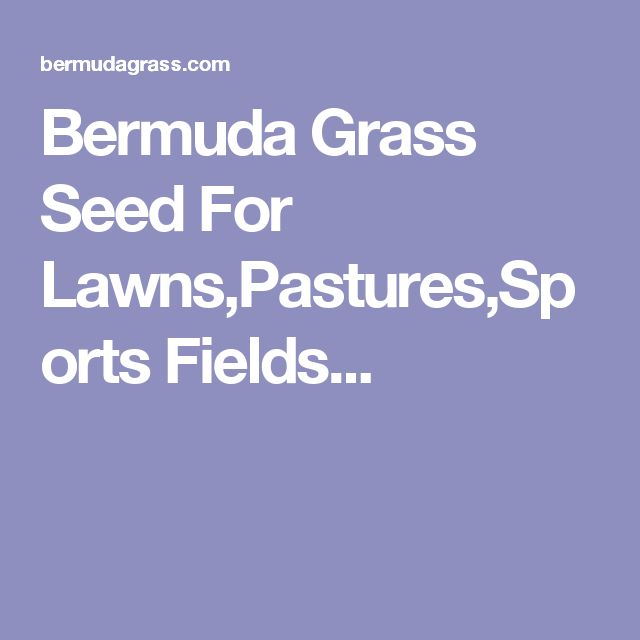 Bermuda Grass Seed For Lawns,Pastures,Sports Fields...