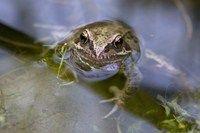 Attract wildlife to your garden pond - Features: Wildlife - gardenersworld.com