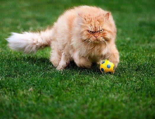 Best Cats Dogs Images On Pinterest - Garfi is officially the worlds angriest cat