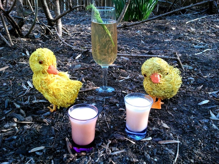 Duckling shots (advocaat & pear soda) and Mother Duck (green tea-infused aquavit, pear eau-de-vie, dry vermouth, Tuaca, bitters, San Pellegrino, dill) #cocktail