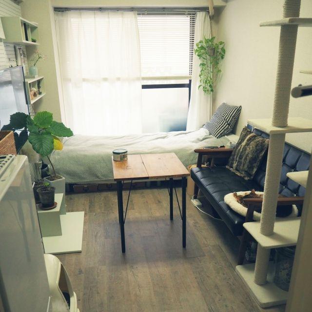 komugiさんの、縦長部屋,カリモク60 Kチェア,ニトリブラインド,うんべらーた,ポトス,ブライワックス ジャコビアン,1k 1人暮らし女性,かりもく60ソファ,整理収納アドバイザー,賃貸,1K,一人暮らし,ねこと暮らす。,鉄脚テーブルDIY,カフェテーブルDIY,Overview,のお部屋写真
